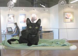 Kitten in Lantos Cat Condo