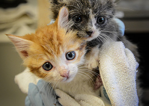 two tiny kittens