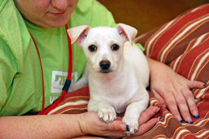 Mobile Adoptions @ Hillsdale Shopping Center | San Mateo | California | United States