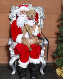 "Santa ""Paws"" Photos @ Peninsula Humane Society & SPCA"