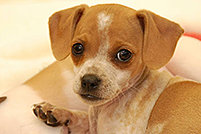 Puppy Kindergarten @ Peninsula Humane Society & SPCA | Burlingame | California | United States
