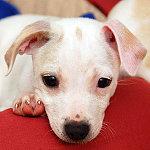 Puppy Preschool @ Peninsula Humane Society & SPCA   Burlingame   California   United States