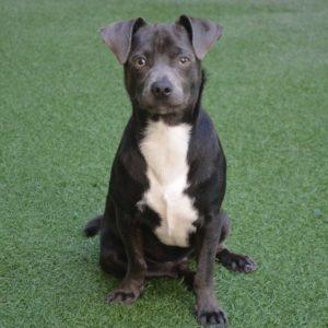 Puppy Kindergarten @ Peninsula Humane Society & SPCA | Burlingame | California | United States