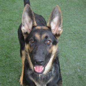 Companion Dog Level 2 @ Peninsula Humane Society & SPCA | San Mateo | California | United States