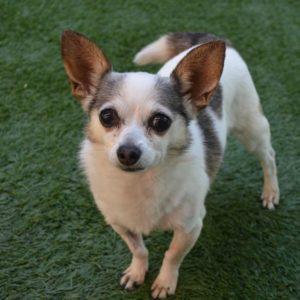 Companion Dog Level 1 for Shy Dogs @ Peninsula Humane Society & SPCA | San Mateo | California | United States