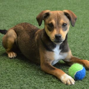 Puppy Preschool @ Peninsula Humane Society & SPCA | San Mateo | California | United States