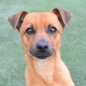 Companion Dog Level 1 for Small Dogs @ Peninsula Humane Society & SPCA | Burlingame | California | United States