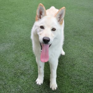 Companion Dog Level 1 @ Peninsula Humane Society & SPCA | Burlingame | California | United States