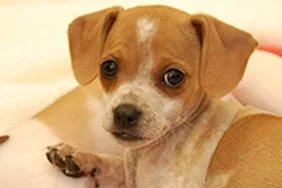 Puppy Kindergarten @ Peninsula Humane Society & SPCA