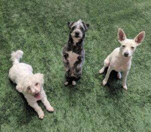 Animal Sanctuary - Peninsula Humane Society & SPCA