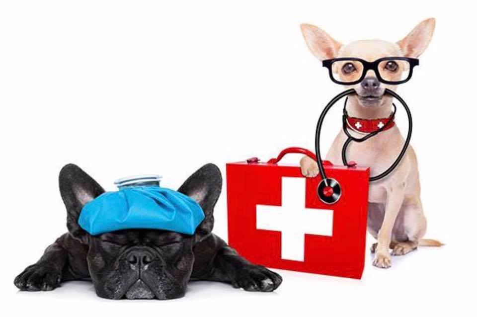 Pet CPR & First Aid - Peninsula Humane Society & SPCA